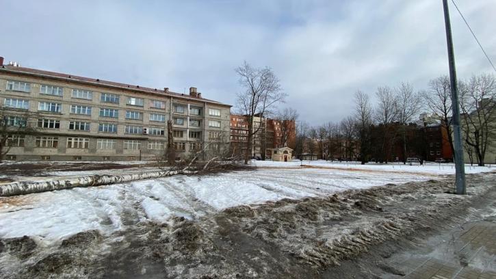 Жители Крестовского острова возмущены вырубкой деревьев из-за строительства храма