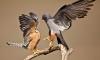 В Петербурге жители заметили трех редких птиц
