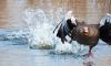 Навигатор для птиц: ученые СПбГУ выяснили, как перелетные птицы ориентируются в магнитном поле