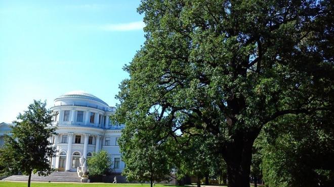 Трехсотлетний дуб на Елагином острове получил статус памятника природы