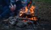 Двухлетний петербуржец отравился жидкостью для розжига