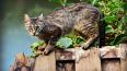 Петербуржцам запретили гладить кошек и собак за границей