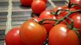 Около 12 тонн марокканских томатов не прошли фитосанитар ...
