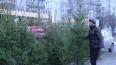 Первая новогодняя ёлка примет под свои ветви петербургских ...