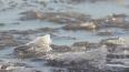 Спасатели призывают петербуржцев не выходить на лед