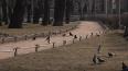 ГАТИ разрешила высадить деревья в парках, садах и ...