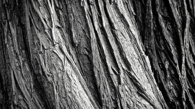 В Ленобласти три человека разбились насмерть, въехав в дерево