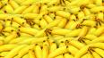 Эквадорские бананы с сюрпризом: полиция нашла 50 кг нарк...