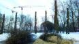 """Активисты начали инвентаризацию """"омоложенных"""" деревьев"""