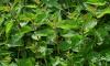 В Ленобласти фермера обязали к принудительным работам из-за сорняков