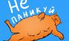ИТМО просвещает о коронавирусе с помощью котиков