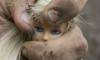 Извращенец из Поморья насиловал свою 5-летнюю дочь и 85-летнюю соседку