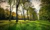 Вишневский попросил защитить Муринский парк от застройки