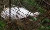 После жестокого убийства козы в Ленобласти завели уголовное дело