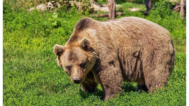 """14-летнюю девочку неделю искали в """"медвежьем"""" районе сибирской тайги"""