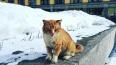 Грядет похолодание: в Ленобласть надвигаются морозы ...
