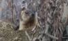 В Ленинградском зоопарке сурки губернатора Ленобласти Дрозденко вышли из зимней спячки