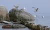 В Ленобласти спасают налетевшую на камни парусную яхту