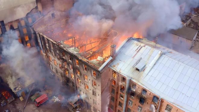 """Десятки кошек из приюта в здании """"Невской мануфактуры"""" сбежали во время пожара"""