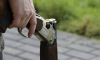 Петербуржцу дали срок за спрятанное ружье