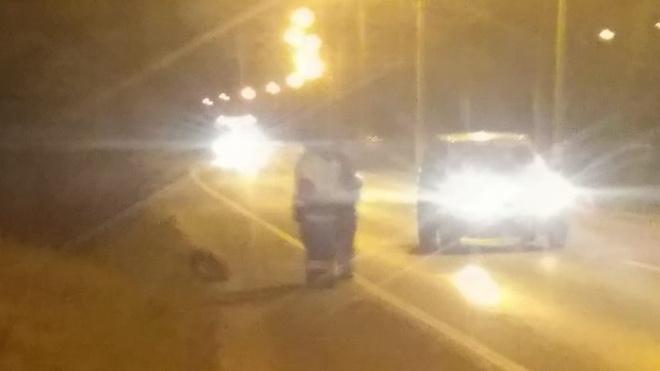 Фото: у Лисьего Носа маршрутка сбила кабана