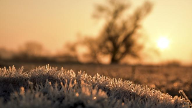 Петербургскую зиму 2019-2020 признали самой теплой за всю историю города