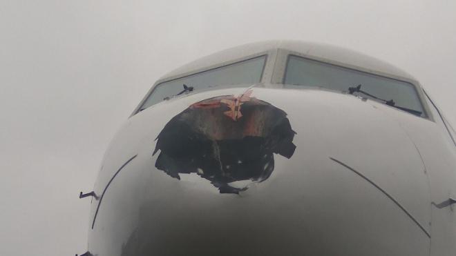 Фото: в Пулково птица пробила нос самолету, прилетевшему из Москвы
