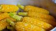 В Петербург не пустили 25 тонн зараженной кукурузы ...