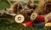 На птицефабрике в Ломоносовском районе найдено оружие