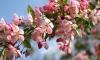 Гидрометцентр: Весна 2014 года - самая теплая в истории России