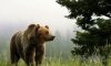 В заповеднике недалеко от Нью-Йорка медведь растерзал туриста