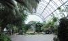 Петербургский депутат выступил против участия бизнеса в реконструкции оранжерей Таврического сада