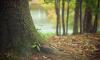 В лесу Ленобласти нашли тело женщины без головы