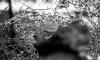 В Выборгском районе двое ограбили АЗС при помощи топора