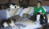 Сильная и независимая женщина из Америки держит дома 1100 кошек
