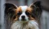 В Петербурге разрешили возить маленьких собак без справки от ветеринара