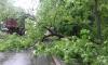 Упавшее дерево в Петербурге на проезжую часть перекрыло обе полосы