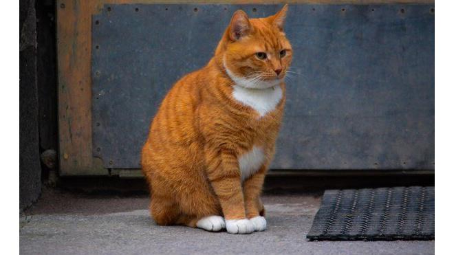 Филимон и Кошка из Выборгского Замка попали в ТОП-10 самых известных котов Ленобласти