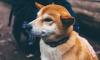 В Ленобласти до конца мая будут отлавливать бродячих собак