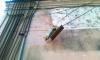 Кошку Тишину Матроскину пытались украсть пьяные вандалы