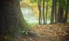 Леса Выборгского района можно посещать на выходных