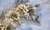 В Петербурге выберутлучшую новогоднюю дворовую елку