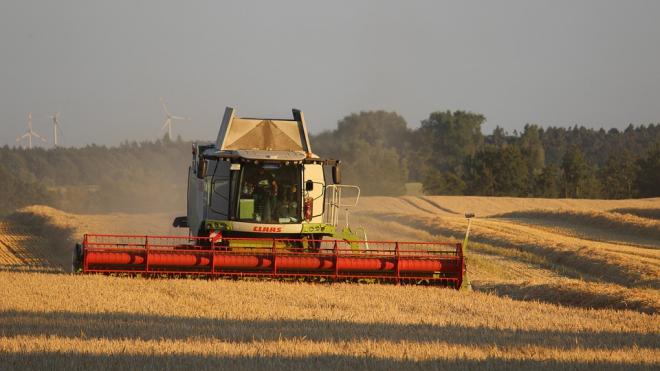 В Ленинградской области начинают собирать урожай