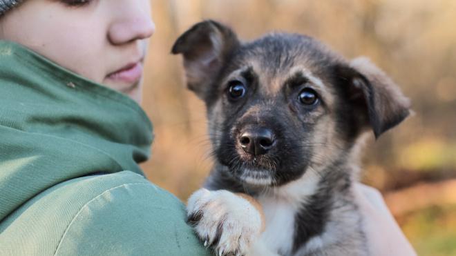 В Ленобласти приют вынужден просить 200 тысяч на корм для собак