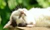 Сотрудница ООН оставила своим котам наследство в $300 тыс