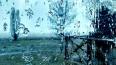 Леус: Гольфстрим спровоцировал зимнюю оттепель в Петербу...