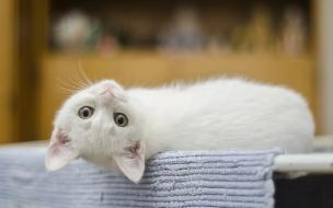 В ноябре 17 жителей Выборгского приюта кошек нашли своих хозяев