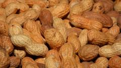Поставщик орехов и ягод из Ленобласти отсудил 3 тысячи долларов у заказчика из Воронежа