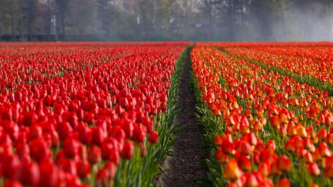 В Колпинском районе за месяц высадят около 250 тысяч цветов