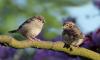 Штат Миннесота атаковали неадекватные птицы
